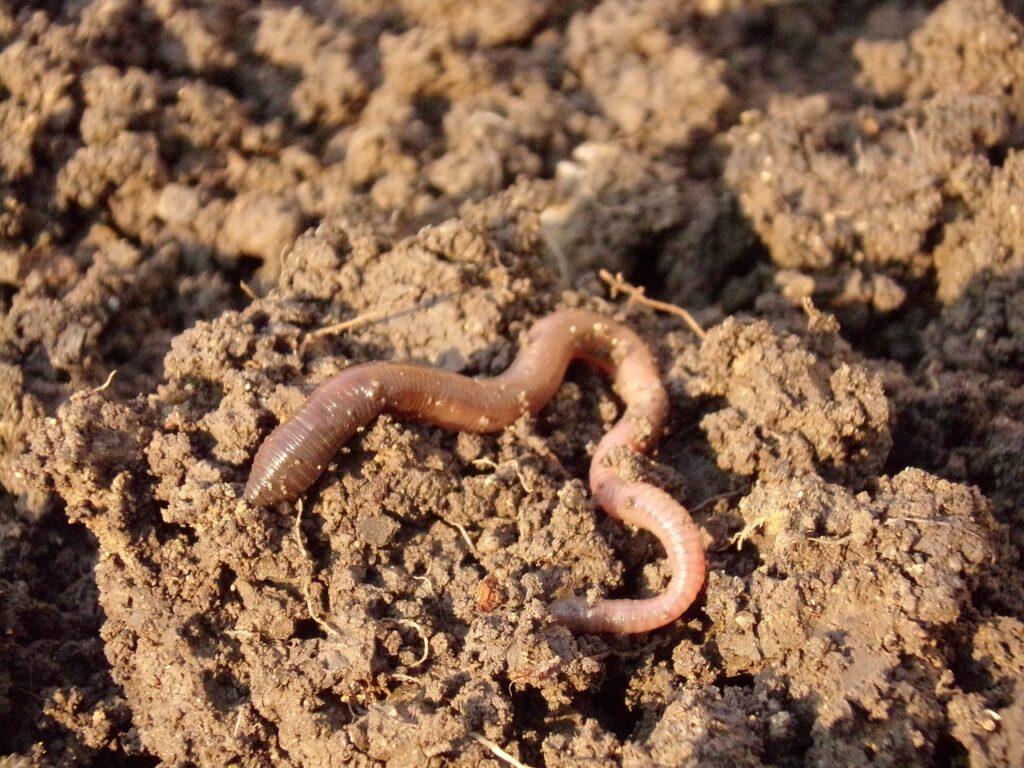 earthworm, soil, dirt
