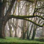 forest, fog, morning